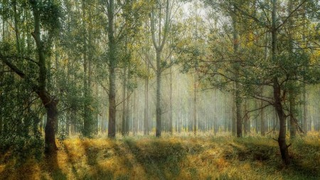 Skog og ved