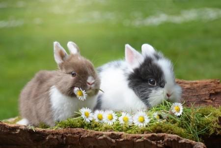 Kanin og smågnagere